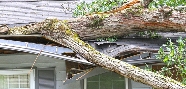 Homeowners insurance coverage and fallen trees