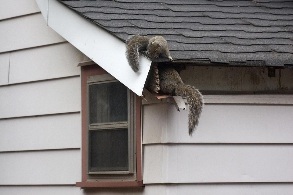 Homeowners insurance squirrel damage