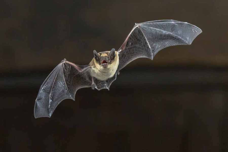 Does Homeowners Insurance Cover Bat Removal?